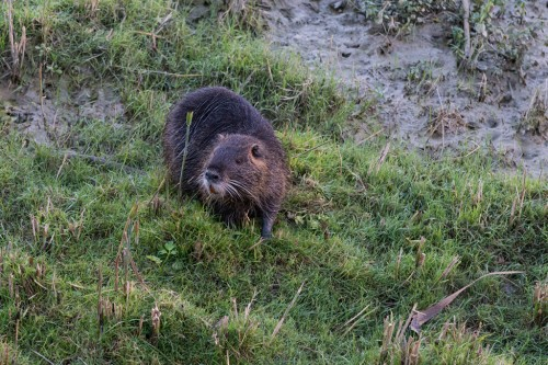 SERRANELLA LAKE AND THE OTTER