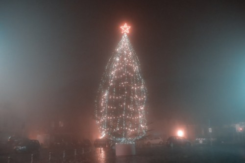 Christmas tree into the fog