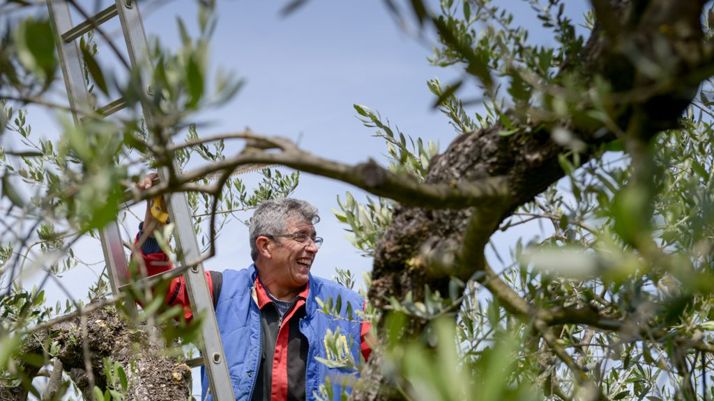 Happy man on the Olive tree