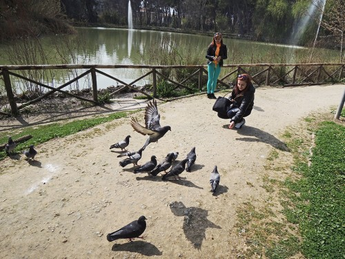 MARIA AND TANIA GIVE TO PIGEONS THEIR FEED AT PINETA DANNUNZIANA