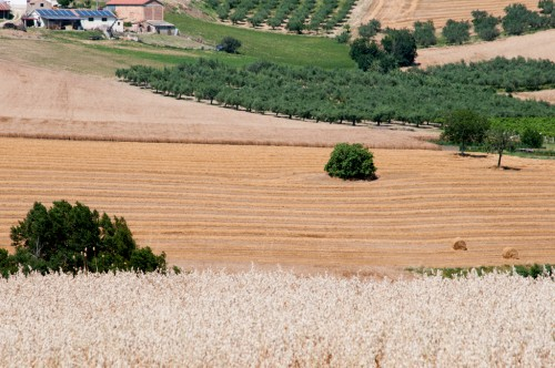 FIELDS NEAR ST. EUSANIO #2