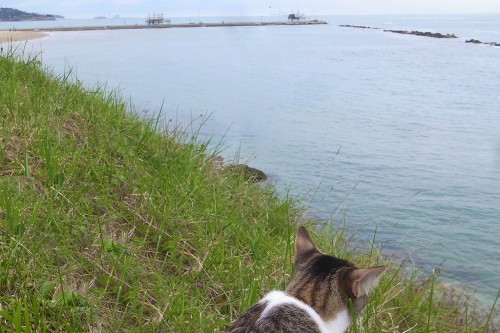 SAN VITO AND THE CAT